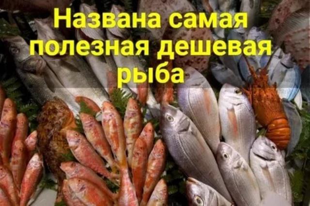Самая полезная дешевая рыба