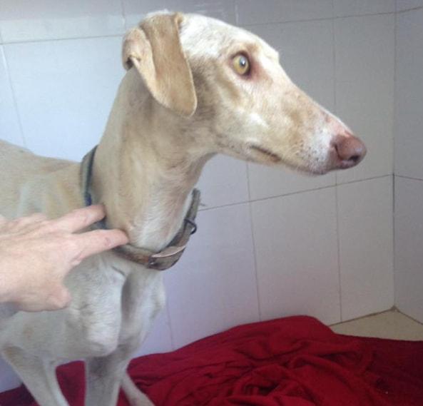 Собака со сломанными лапами