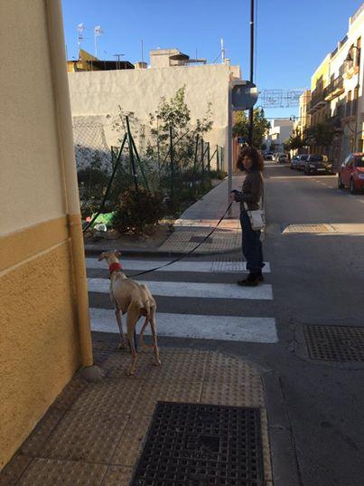 Собака со сломанными лапами привела ветеринара к своим щенкам