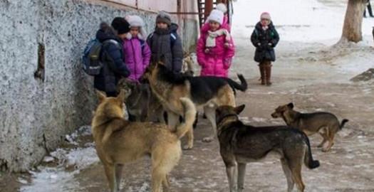 Собаки пришли на помощь