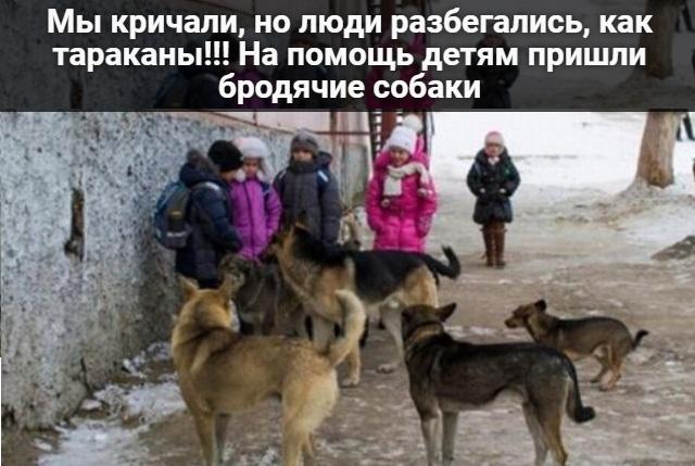 Собаки пришли на помощь детям