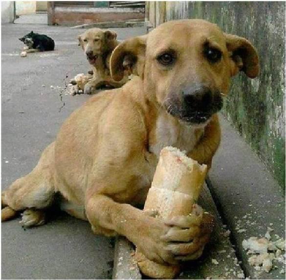Покормили бродячих собак