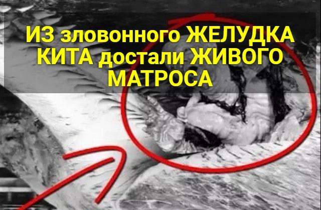 Матрос выжил в желудке кита