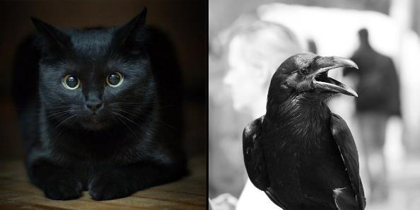 Оптическая иллюзия: кот или ворон?