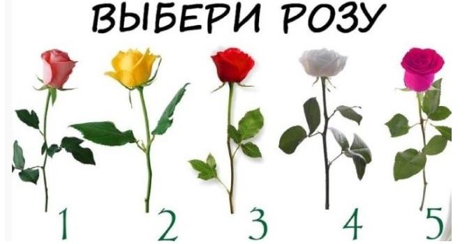 Тест: выберите розу