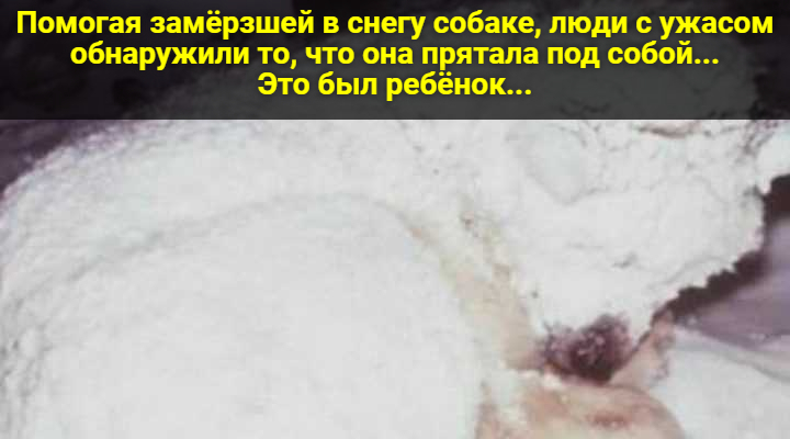Помогая замёрзшей в снегу собаке, люди с ужасом обнаружили то, что она прятала под собой