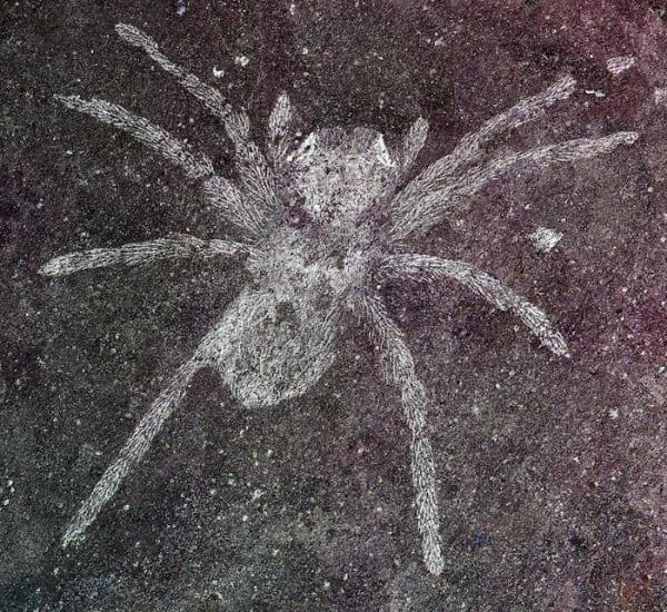 Обнаружены пауки возрастом 110 млн лет со светящимися глазами