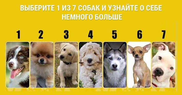 Выберите 1 из 7 собак и узнайте о себе немного больше