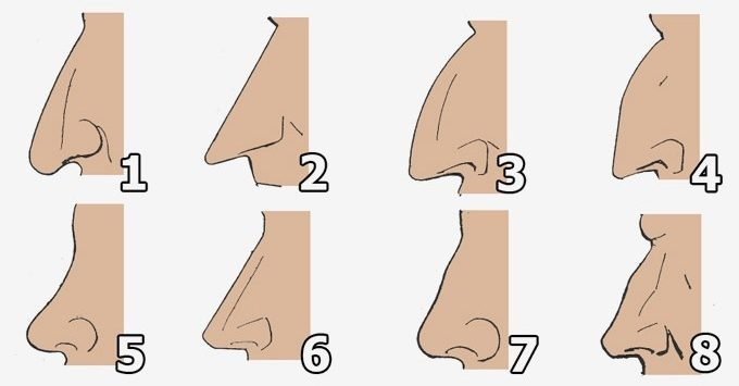 Что может сказать о человеке его нос