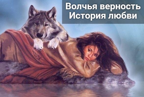 Волчья верность - История любви