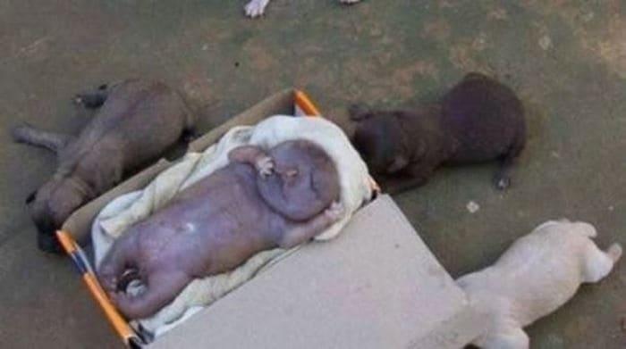 Бездомная собака родила человеческого детеныша-2