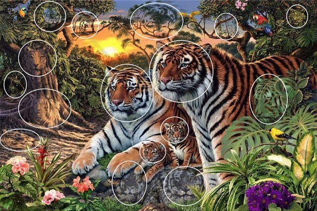 Где расположены тигры