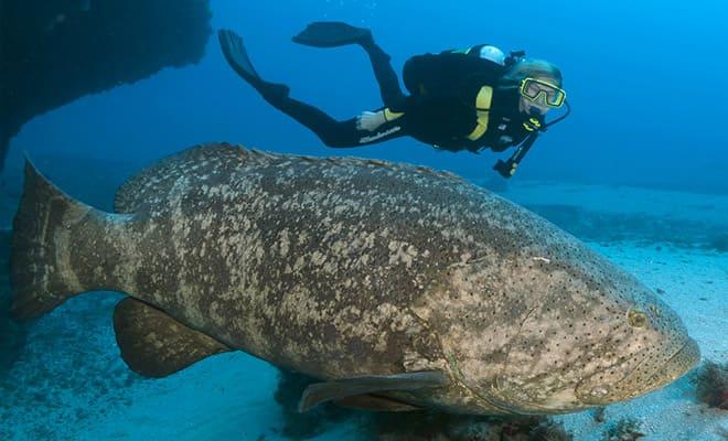 Это существо вынырнуло из глубин и проглотило акулу на глазах рыбаков!-2