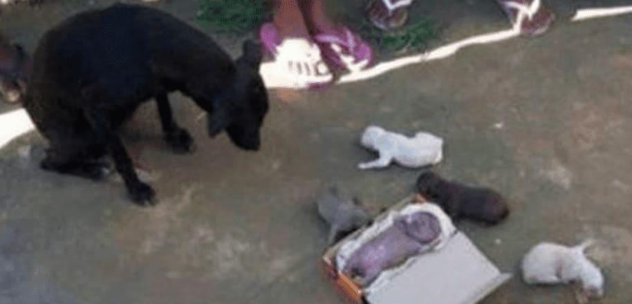 Бездомная собака родила человеческого детеныша-3