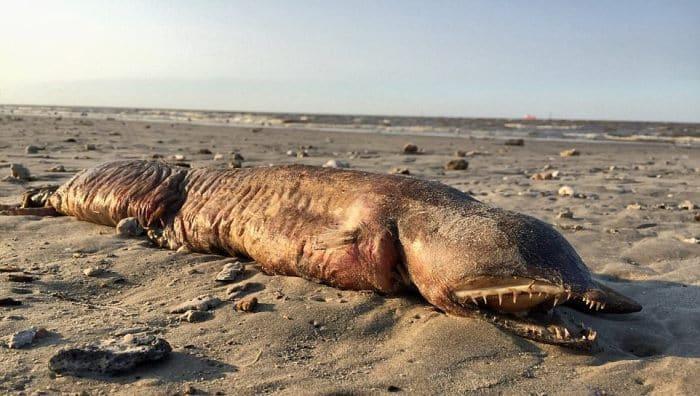 На берегу нашли это чудовище! Что это, никто не знает...