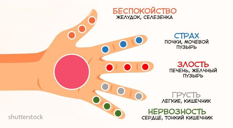 Каждый палец связан с 2 органами