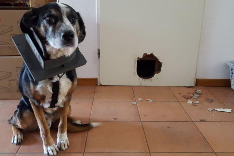 Фото, которые покажут, что собаки могут рассмешить любого