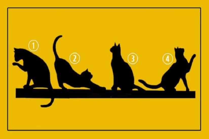 Забавный личностный тест: Выберите кошку и узнайте вашу цель жизни