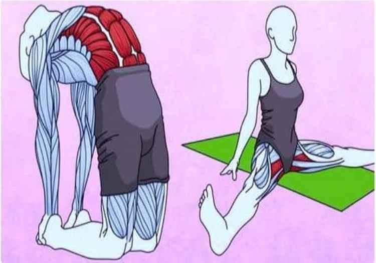 6 упражнений на растяжку, чтобы избавиться от боли в спине и бедрах