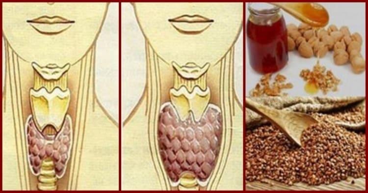 Смешайте по одному стакану гречневой крупы, грецких орехов и меда, и ваша щитовидка оживет