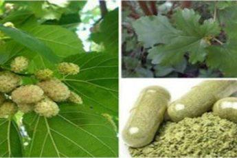 Это растение может вылечить опухоли, гипертонию и сахарный диабет! Вы должны это ЗНАТЬ!