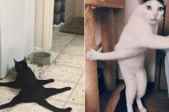 «У меня кот сломался. Дайте нового»: смешная подборка фотографий котиков, которая поднимет настроение