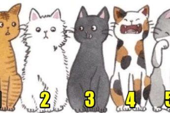 Выберите котика и узнайте, какой вас видят окружающие