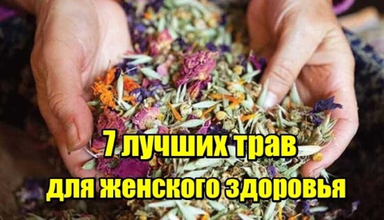 7 лучших трав для женского здоровья. Они творят чудеса!