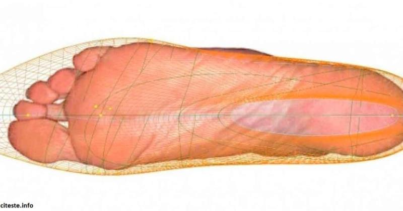 Есть 1 врач, который говорит, что срок жизни зависит от размера ноги!